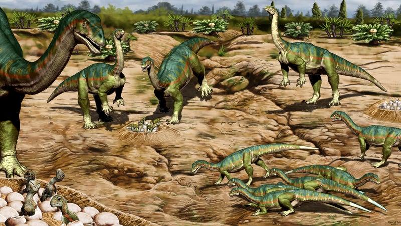 Dinosaurs who stuck together, survived together