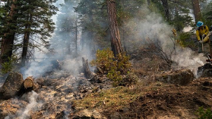 Dixie fire burn scars on trees in Lassen National Park in California