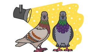 Two gray pigeons in a spotlight in a Rosemary Mosco cartoon