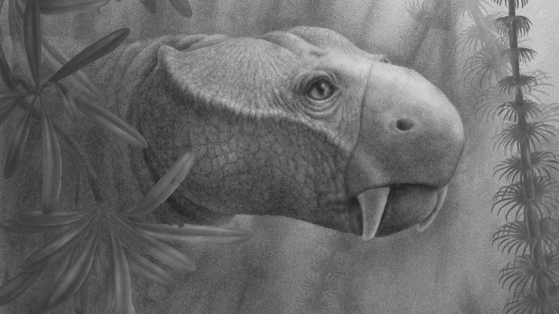 dicynodont